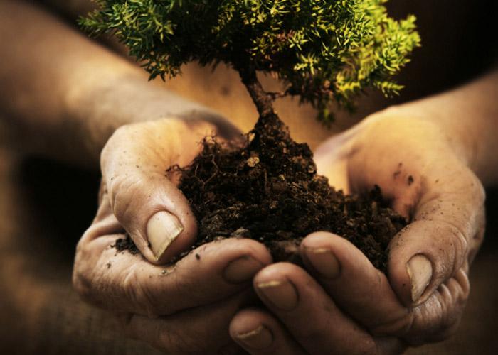 Back to the roots! Wie uns der Bezug zur Natur gesundheitlich helfen kann